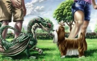 Обзор любовной совместимости между драконом и собакой